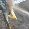 スランプ?いや。ヘタクソなだけ。釣りは改めてメンタルが大事だなと思う手抜き釣行記。